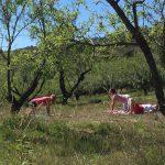 cat cow tijdens yoga en actief vakantie in Spanje