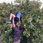 sinaasappelen plukken tijdens sportvakanties in Spanje