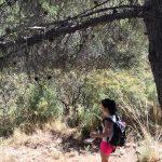 bos hike tijdens yoga en hiking vakantie